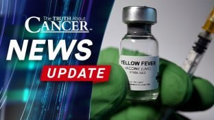 Renowned Cancer Researcher Dies After Routine Yellow Fever Vaccine