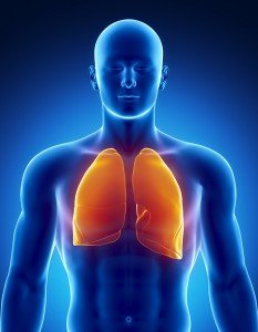 Human respiratory system with lungs