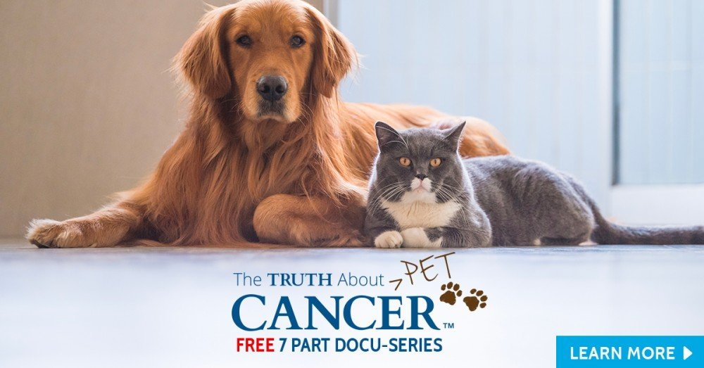 Natural Approaches for Preventing & Treating Cancer in Dogs