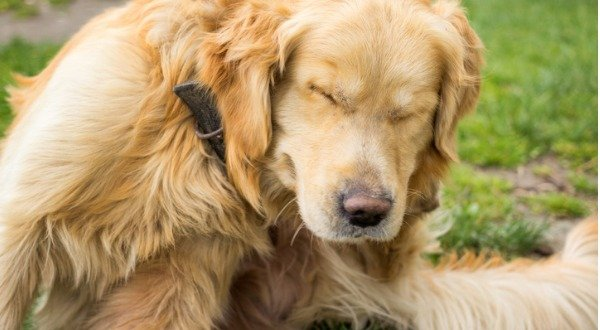 Why Use Natural Flea Tick Prevention For Your Pets