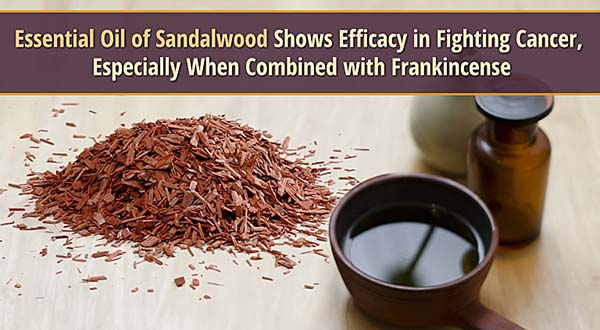Essential Oil of Sandalwood Shows Efficacy in Fighting Cancer