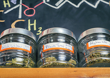 strains of cannabis in jars