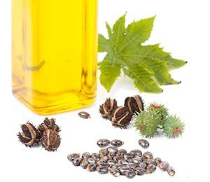 Castor oil is made from the seeds of the castor plant (Ricinus communis)