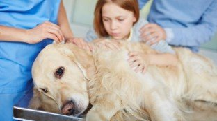 Natural Approaches for Preventing & Treating Cancer in Dogs and Cats