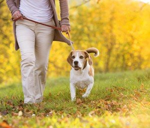 Regular physical activity has numerous health benefits for pets… and their people