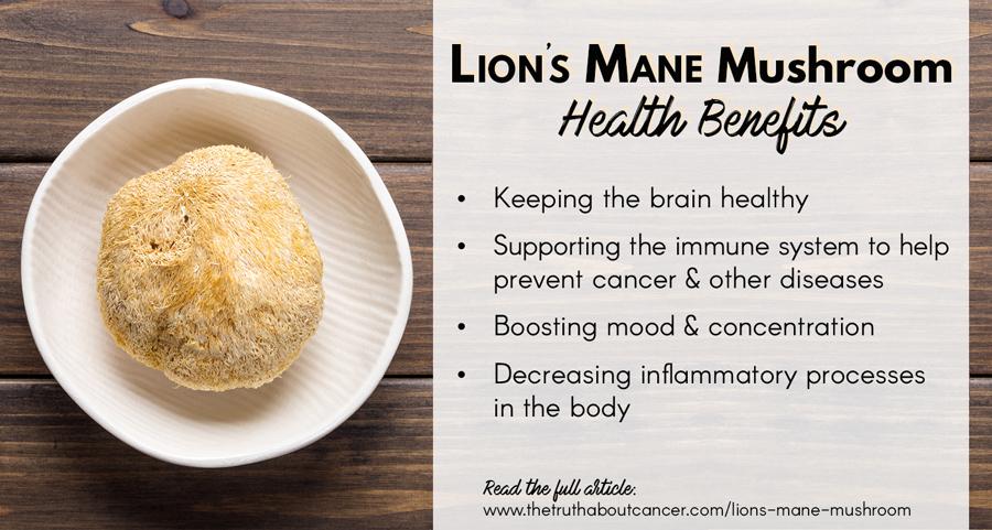 Lion's-mane-mushroom-health-benefits