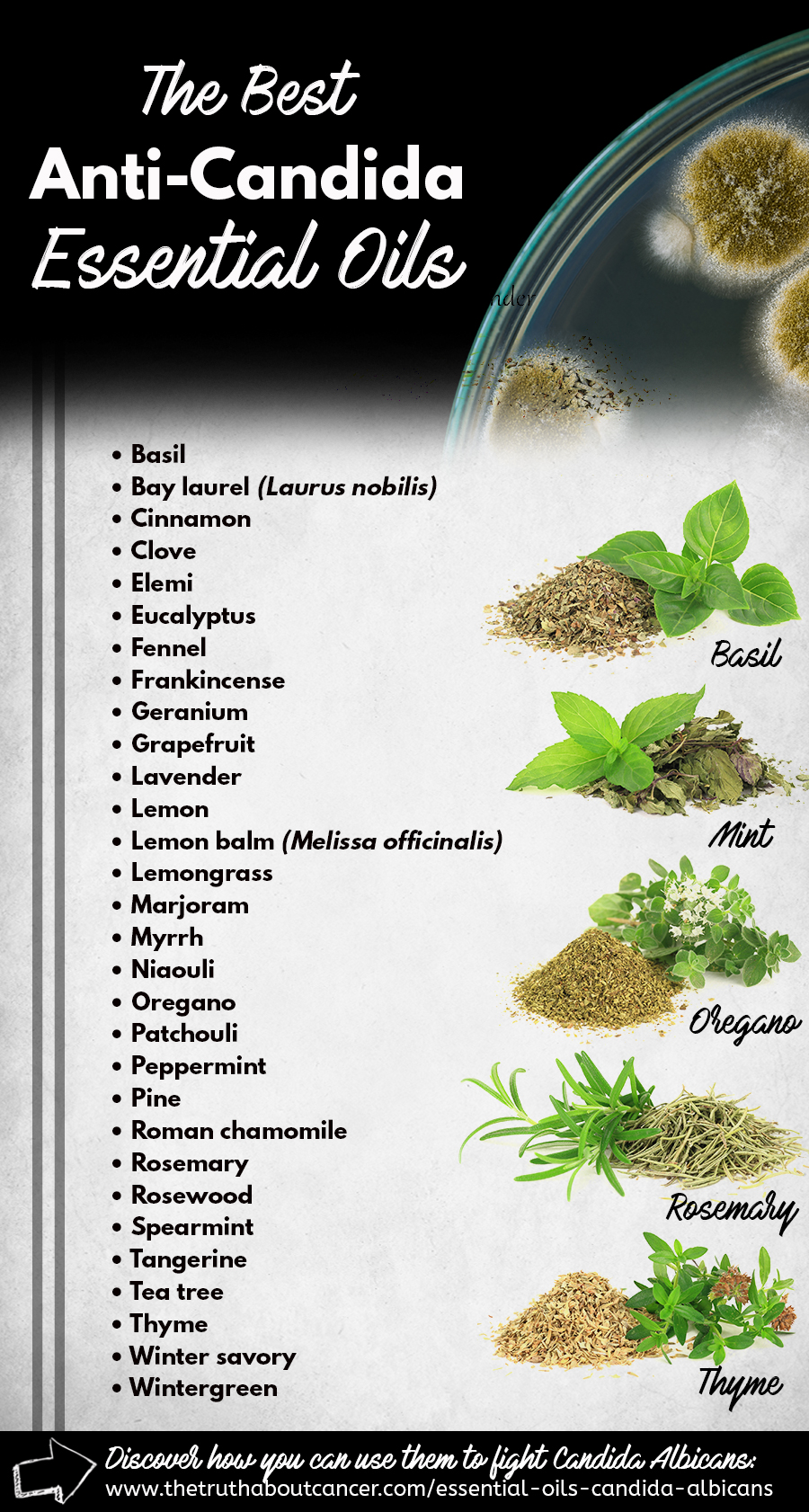 Candida Auris Natural Products