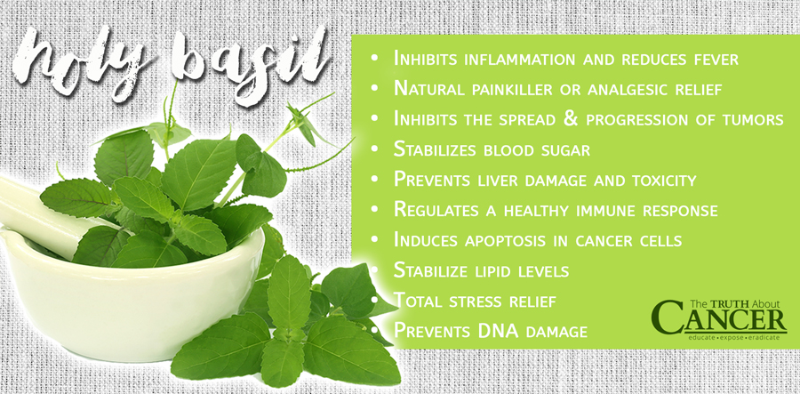 holy-basil-benefits