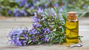 Do You Know These 6 Health Benefits & Uses for Rosemary Essential Oil?