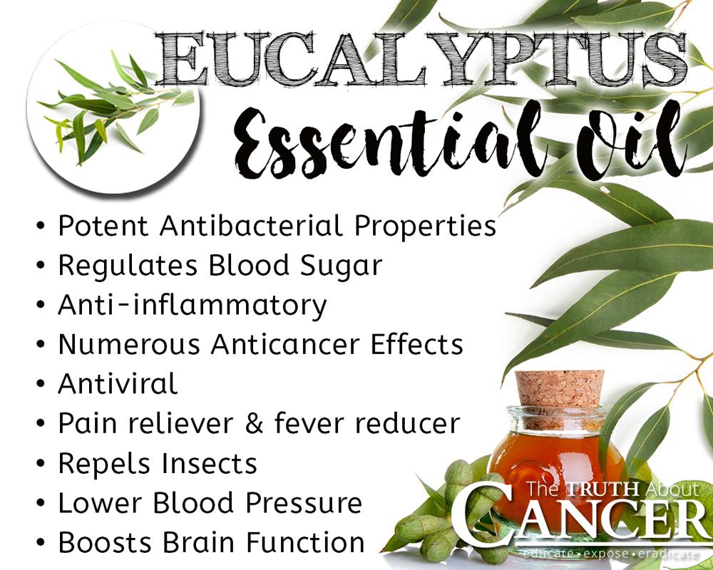 Eucalyptus-benefits