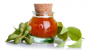 The Powerful Protective Properties of Eucalyptus Essential Oil