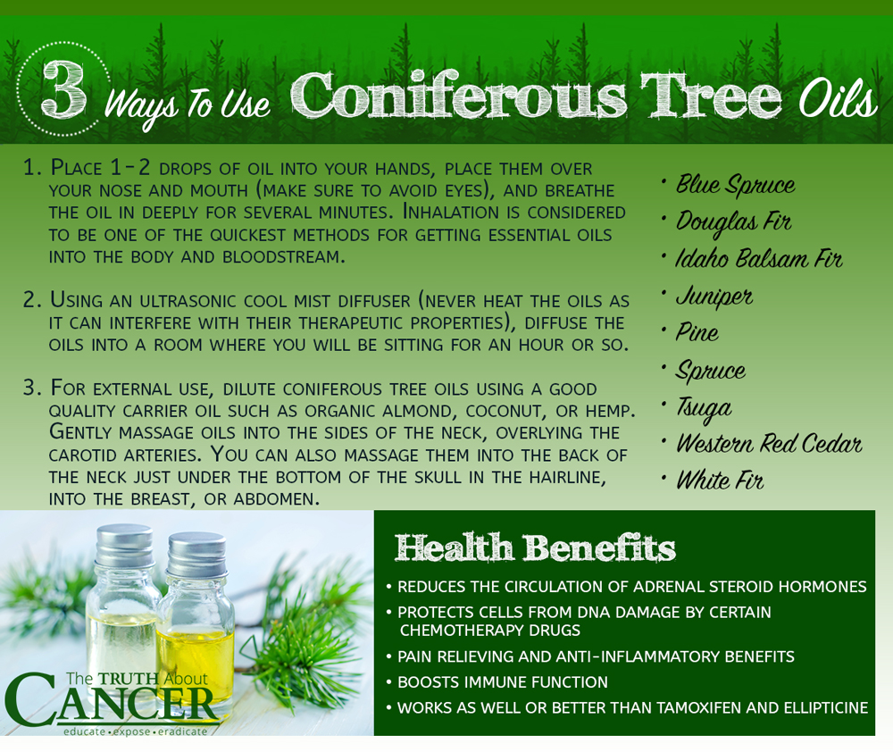 phytochemicals-coniferous-tree-oils-use-benefits