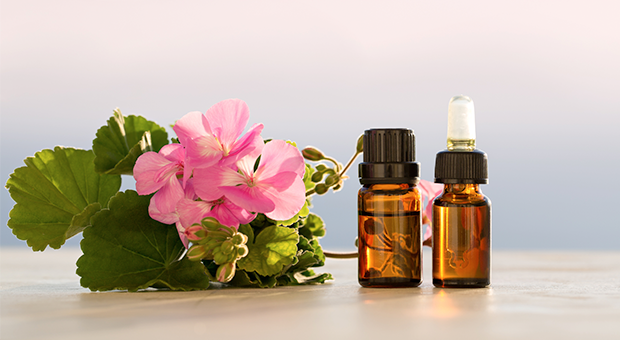 17 Healing Uses Of Geranium Essential Oil