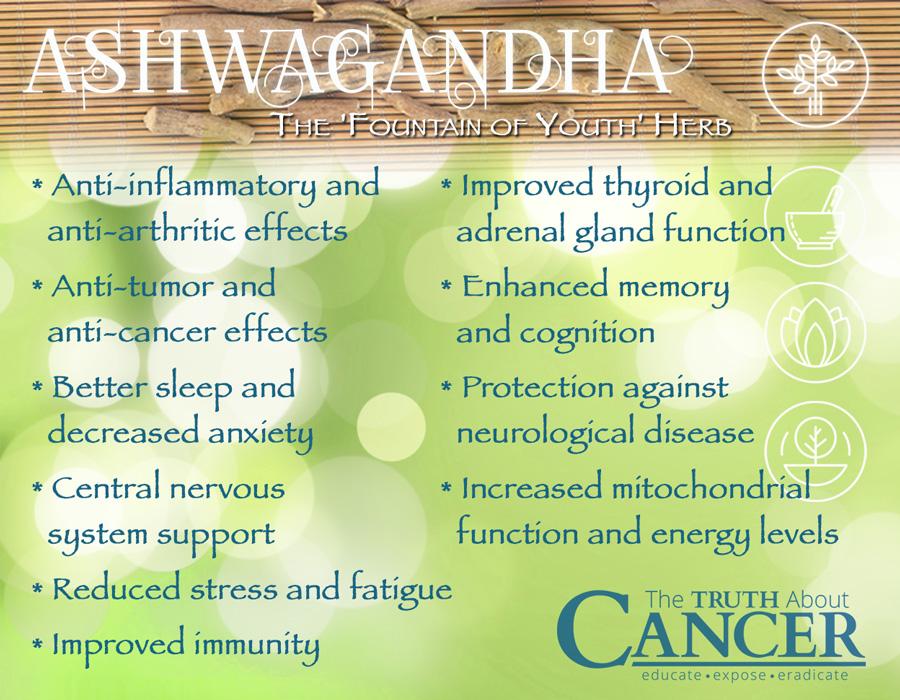 ashwaghanda-herb-ayurveda-medicine