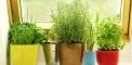 Windowshill-herb-garden
