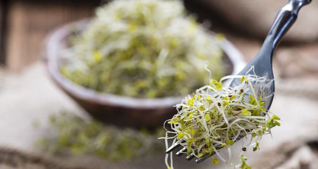 Broccoli Sprouts | Memorial Sloan Kettering Cancer Center
