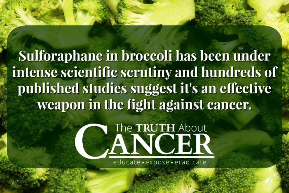 The Surprising Health Benefits of Broccoli