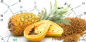 Fighting-Cancer-With-Proteolytic-Enzymes