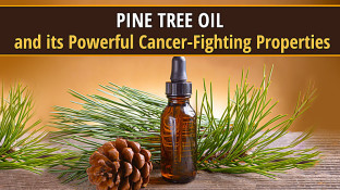 Pine Tree Oil and its Powerful Cancer-Fighting Properties