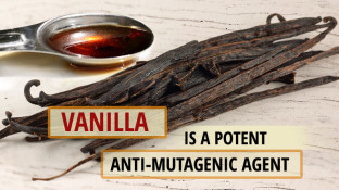Vanillin: The Cancer-Fighting Compound Found in Vanilla Beans