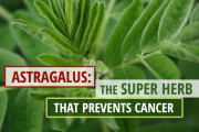 Astragalus Benefits for Cancer