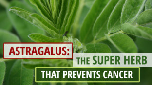 Astragalus: The Super Herb that Prevents Cancer