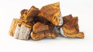 Chaga Mushroom: This Unusual Tree Fungus is a Medicinal Powerhouse