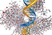 The P53 Gene is Associated with Cancer Development