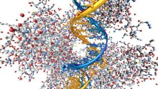 Discover the p53 Gene that Controls Cancer Development