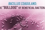 Bacillus Coagulans is one of the most reliant probiotics. Read on to discover its health benefits and why you should start supplement with it.