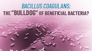 Bacillus Coagulans: A Resilient Probiotic for Maximum Digestive Support