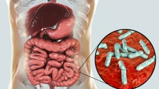 In Sickness and in Health: Everything You Need to Know About the Gut