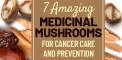 7 Amazing Medicinal Mushrooms for Cancer Care and...