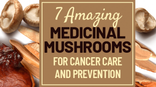 7 Amazing Medicinal Mushrooms for Cancer Care and Prevention