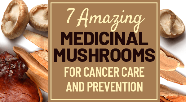 types of mushrooms for cancer