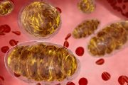 Master the Mitochondria and Reduce Cancer Risk