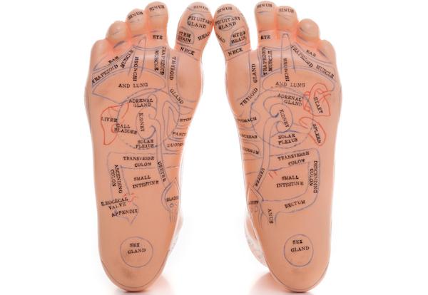 Plastic model of human foot reflexology foot massage