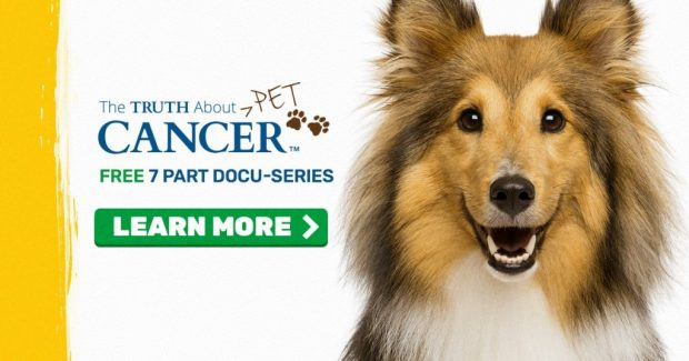 the truth about pet cancer banner 1