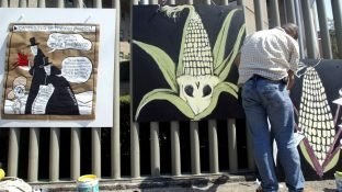 80 Groups Blast US Interference in Mexico's Phaseout of Glyphosate and GM Corn