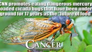 """Counterfeit News Network (CNN) promotes eating dangerous mercury-loaded cicada bugs that have been underground for 17 years as the """"future of food"""""""