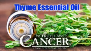 Why It's Time to Discover the Benefits of Thyme Essential Oil