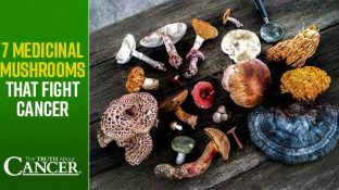 7 Medicinal Mushrooms That Fight Cancer