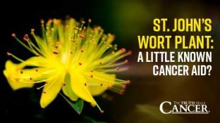 St. John's Wort Plant: A Little Known Cancer Aid?